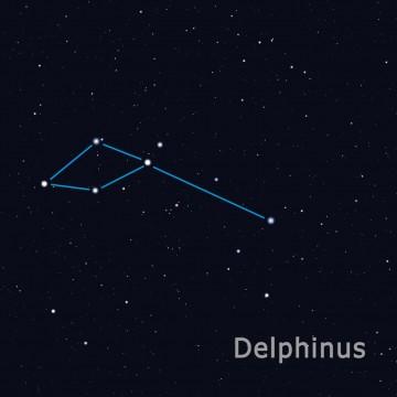 delphinus FIN